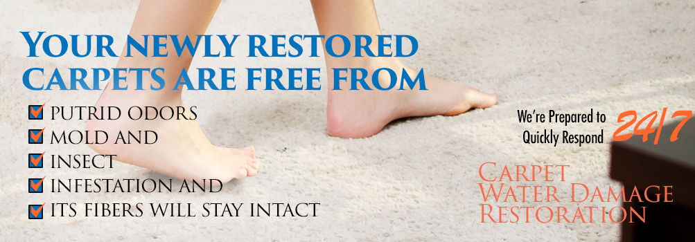 Carpet Water Damage Restoration in Greater Chicagoland